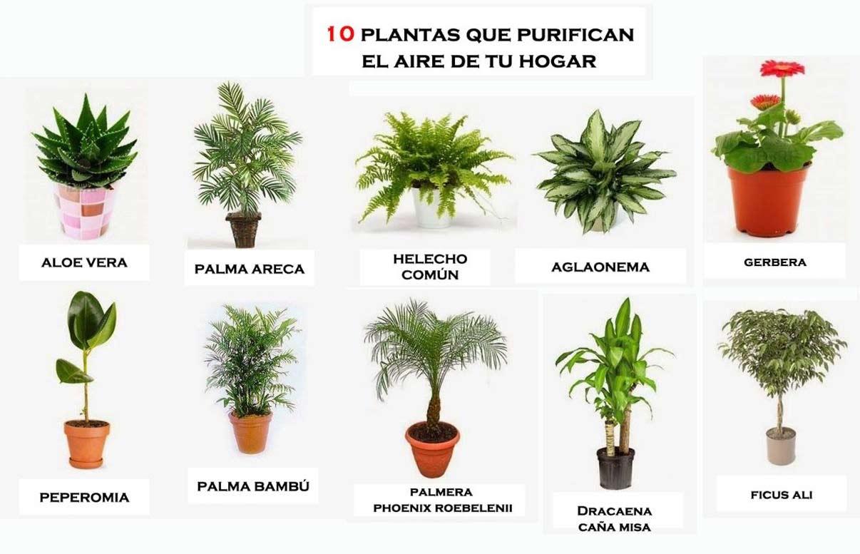 Plantas Aromaticas Para Cocinar | Plantas Para Cocinar Idea De La Imagen De Inicio