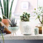 Plantas verdes en casa, consejos